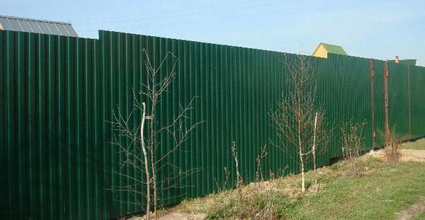 Забор из 3д сетки и профлиста С-8 (RAL 6005 и другие) 2